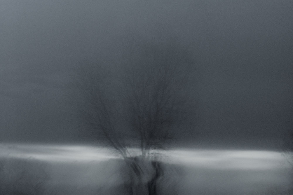 Black and white, curved silhouette of a tree in the distance with blurry edges from intentional camera movement.