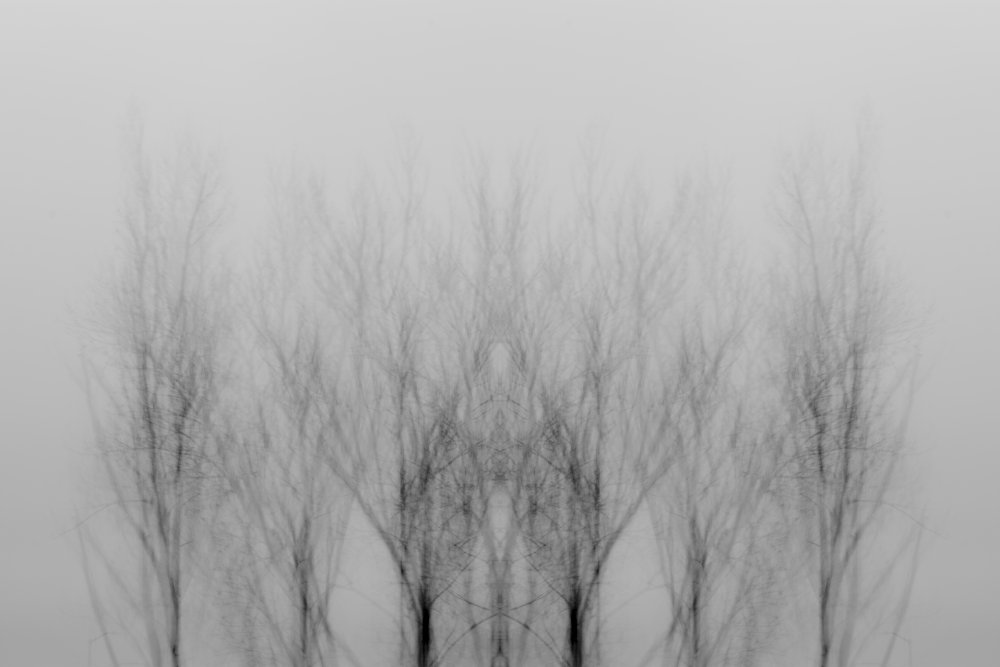 Multiple exposure of trees in black and white