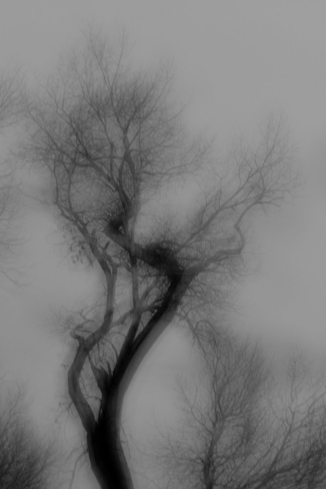 Black and white, curved silhouette of a tree with blurry edges from intentional camera movement.