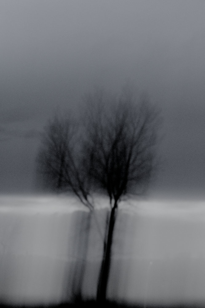 Black and white, vertically stretched form of a tree in the distance.