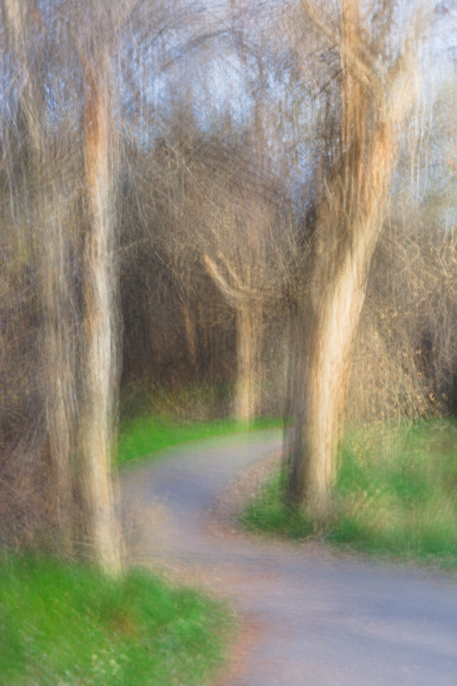 A path winding through woods near the Colorado river