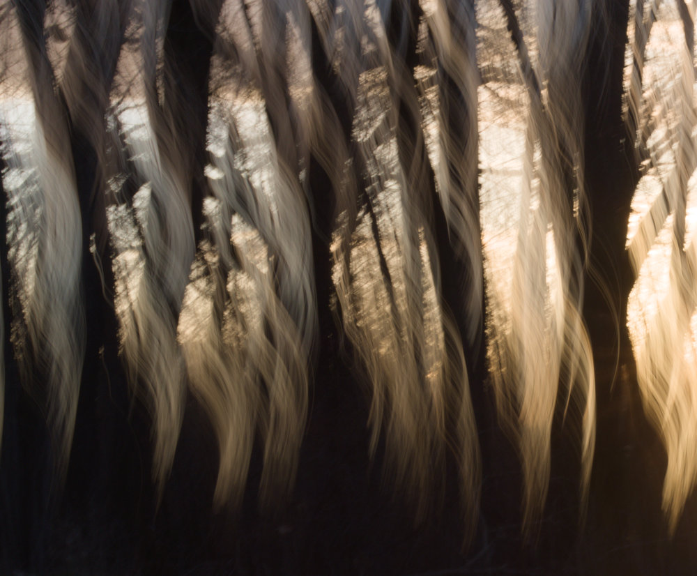 A blurred picture of a sunrise through a stand of trees near the Colorado river