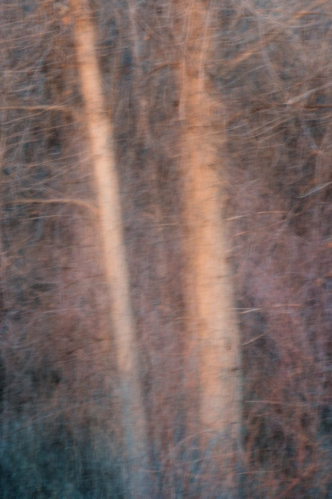 Intentional camera movement and multiple exposure image of two trees.