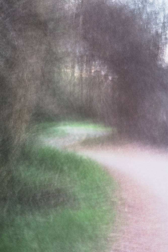 A winding path through the trees