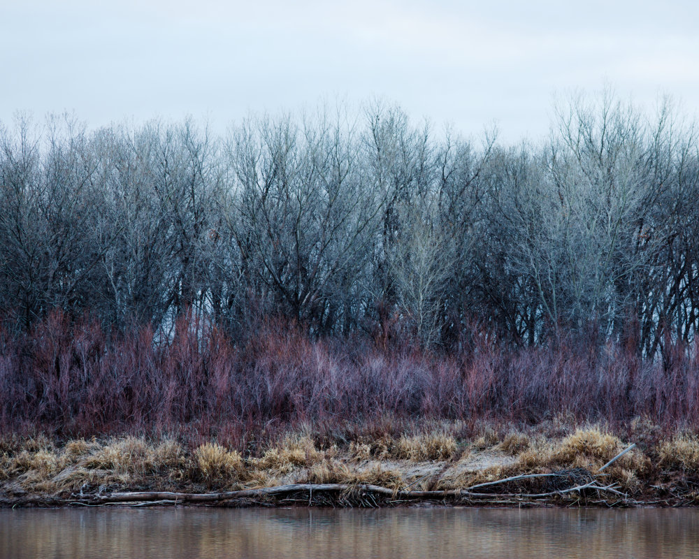 A bank of trees and brush along the Colorado River